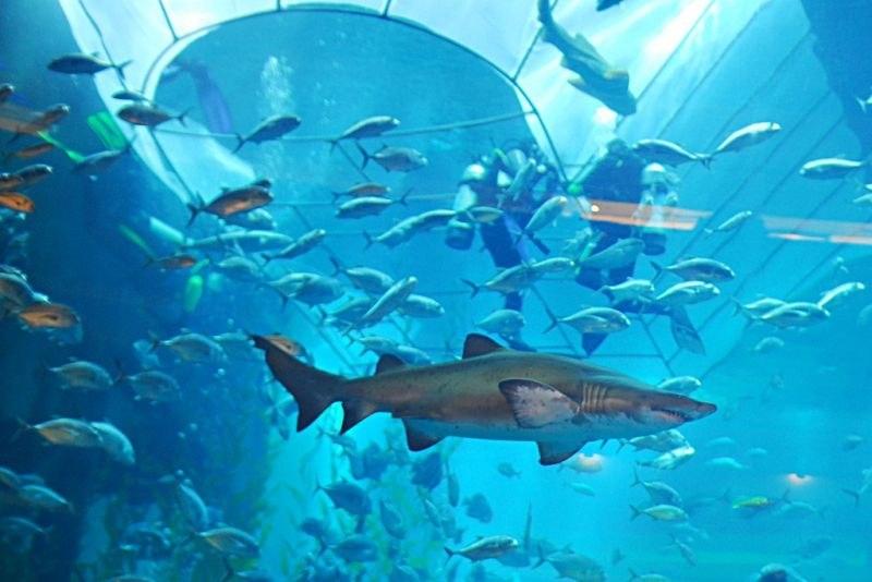 Акулы в аквариуме Дубая