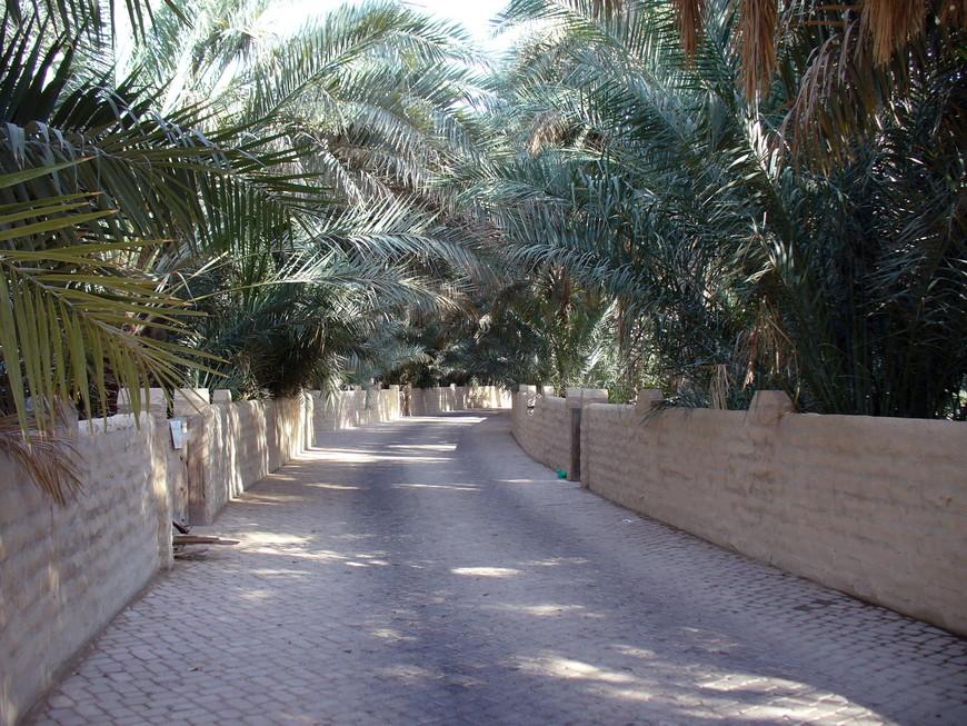 Аллея парка Аль-Айн
