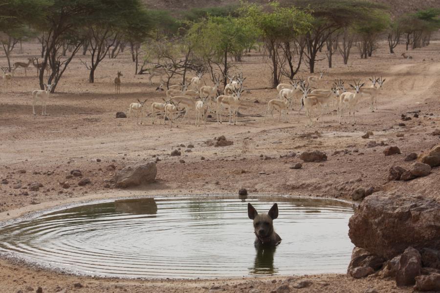 Арабский парк дикой природы