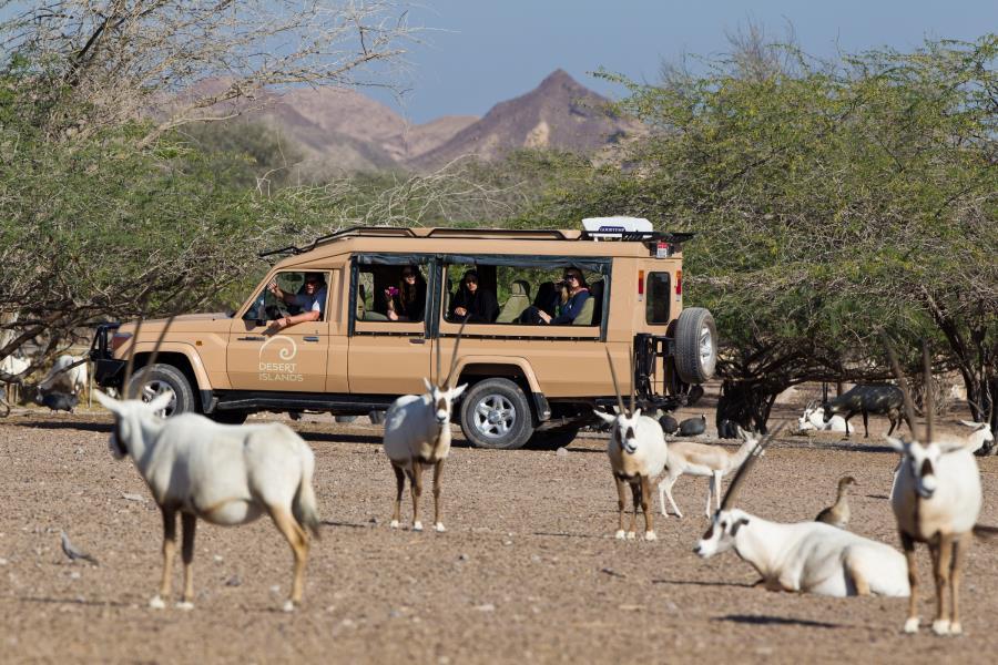 Экскурсия по Арабскому парку дикой природы