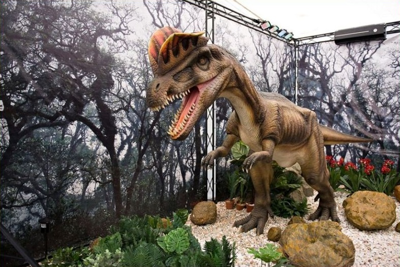 Экспонаты на выставке Dino Live