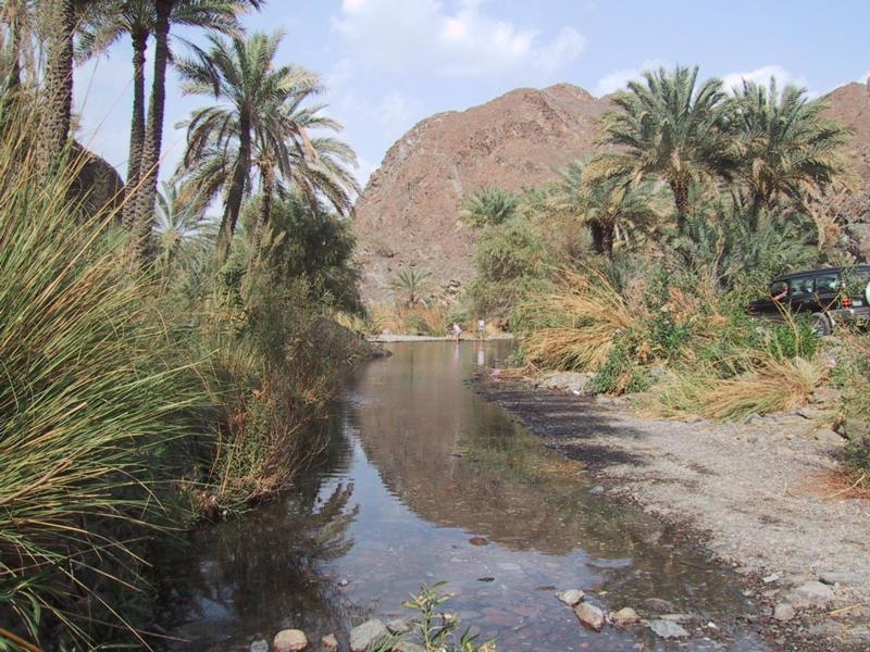 Финиковые насаждения в Вади Азима