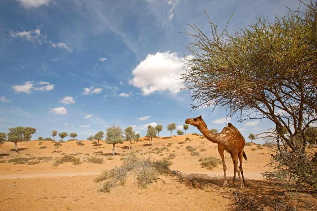 Флора и Фауна пустыни в Рас-аль-Хайме
