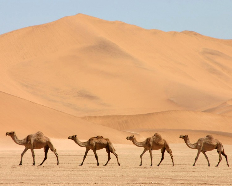 Коробли пустыни