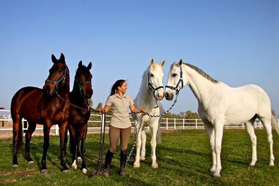 Лошади, пренадлежащие отелю