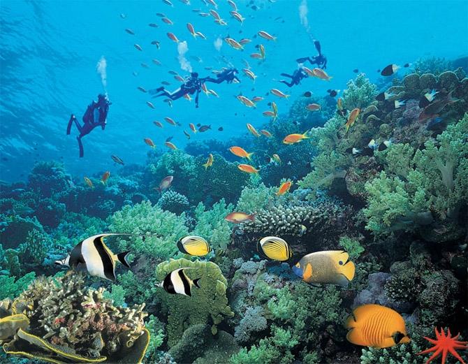 Морской клуб Aqua Aqua