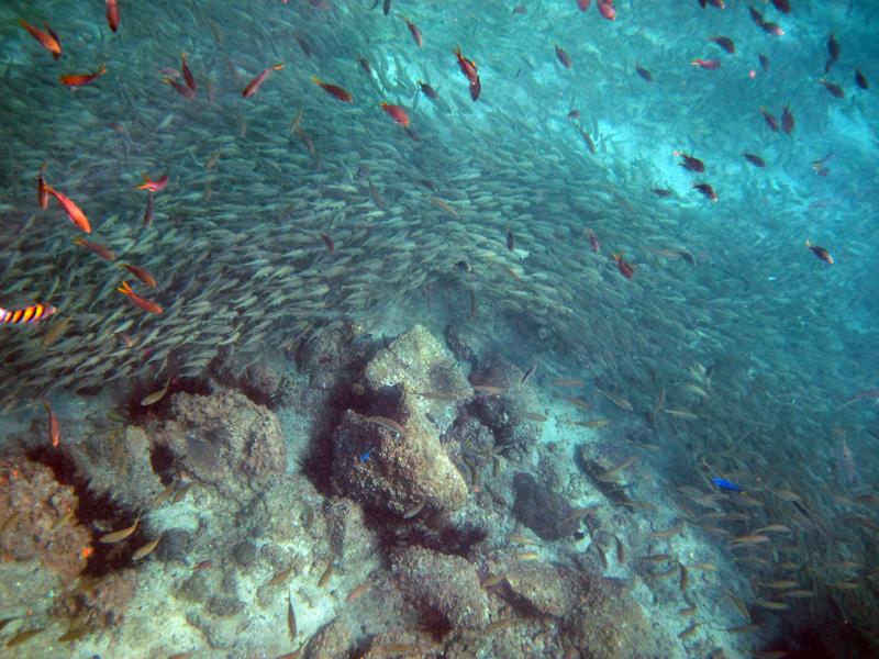 Подводный мир Акульего острова