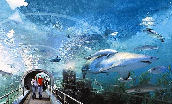 Подводный мир залива