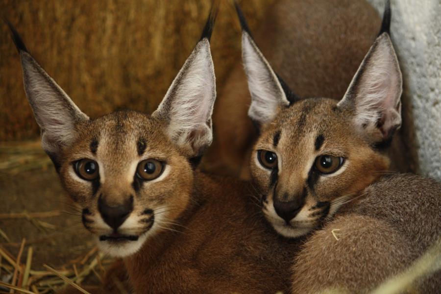 Представители фауны острова