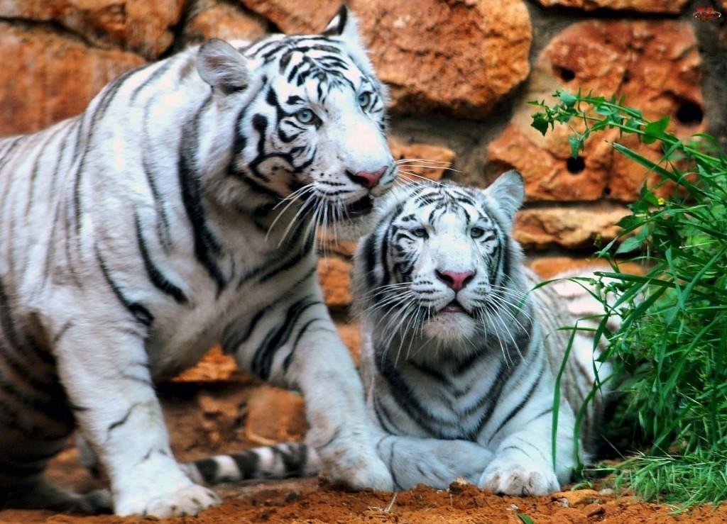 Представители фауны в зоопарке Дубая