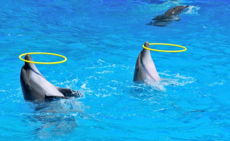 Прекрасные обитатели Дельфинария в Дубае