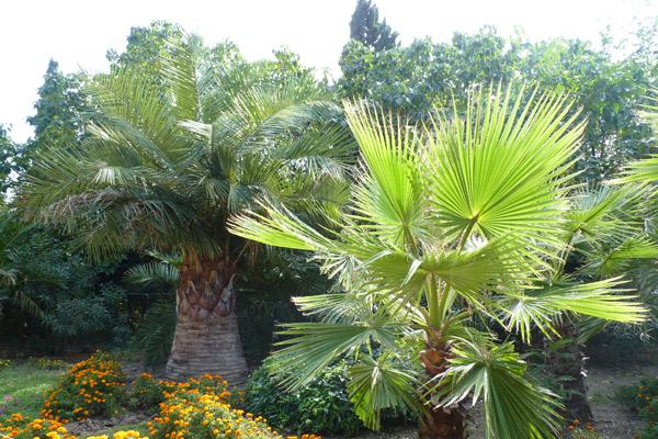 Сады Айн Аль-Мадхаб