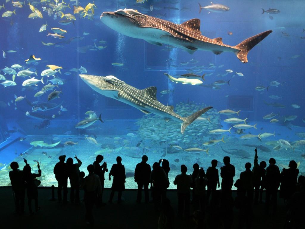 Удивительный подводный мир Аквариума в Дубае