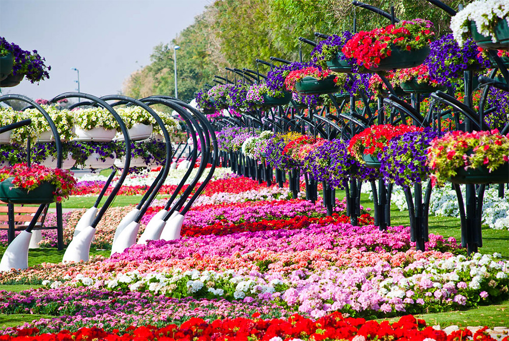 Великолепие цветов AL Ain Paradise