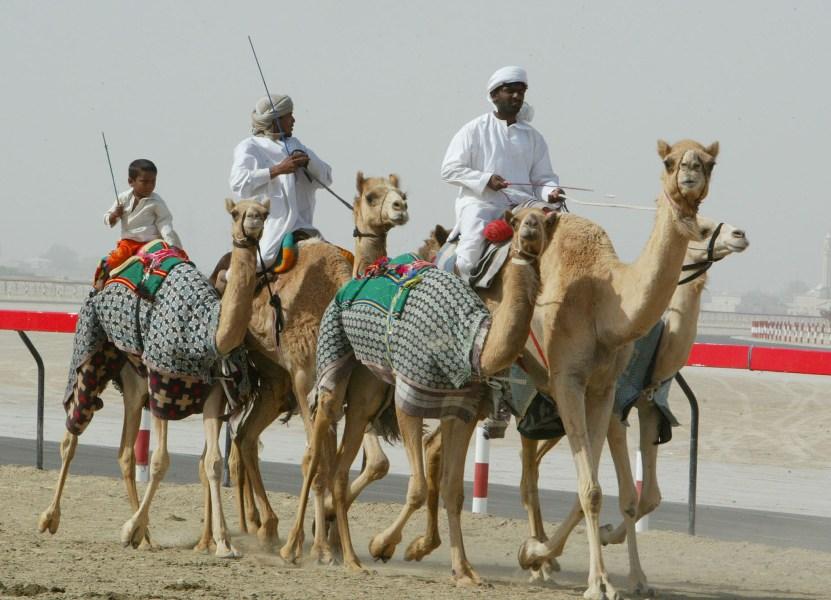 Верблюды и наездники