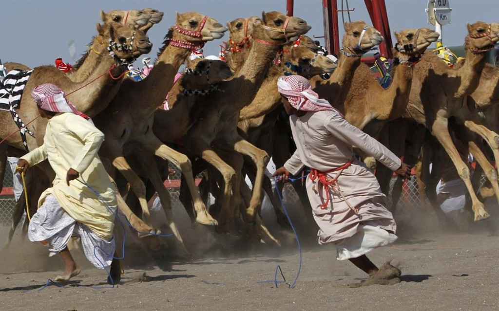 Верблюжьи бега в Аджмане